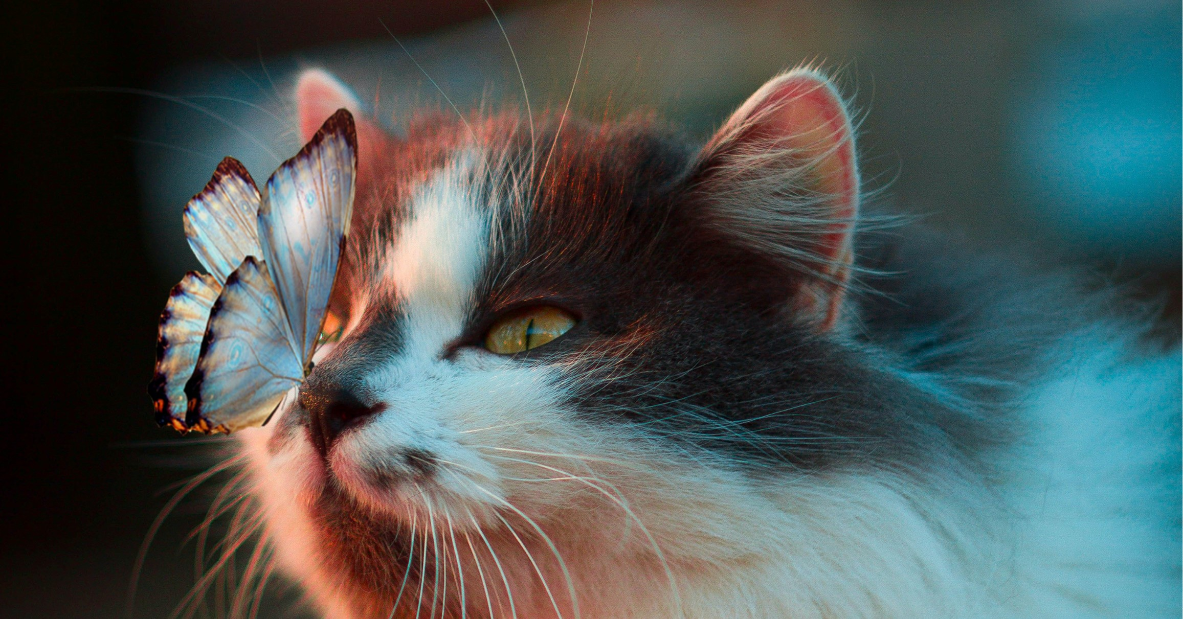 A butterfly lands on a cat's nose.